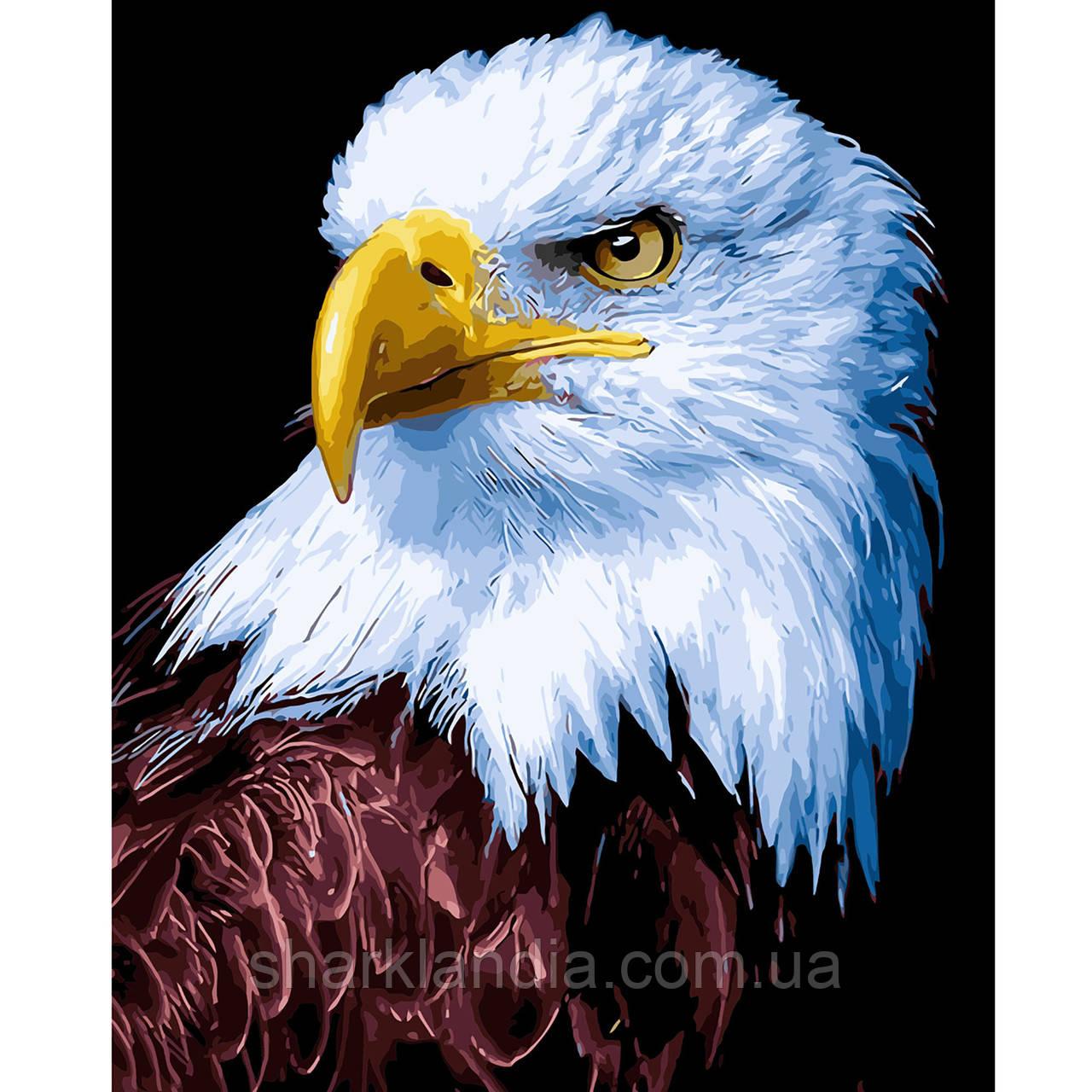 Картина за номерами Орел 2 40х50см Strateg Розфарбовування по цифрам