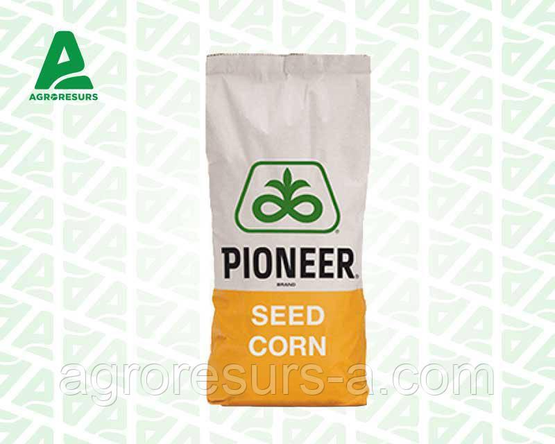 Насіння кукурудзи П0216 / Р0216 (ФАО 480)