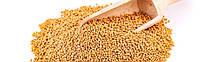 Семена Горчица белая 1кг (мешок 25кг)