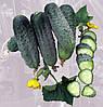 Семена огурца партенокарпического типа Аристократ F1,NongWoo Bio (Корея), упаковка 500 семян