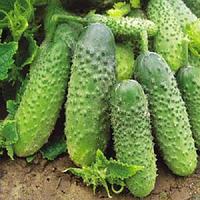 Семена партенокарпического огурца Арктика (Арена) F1, NongWoo Bio (Корея), 1000 семян