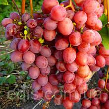 Виноград Изумление (ранний)