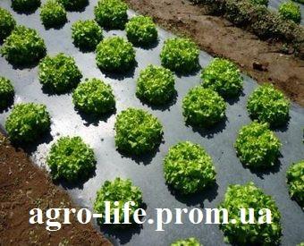Пленка мульчирующая POLITIV (Израиль) черно-серебристая 1.2 *1000м (25мкм) полотно 5 лет - AgroDolina в Виннице