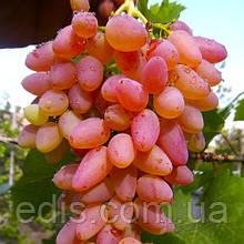 Виноград кишмиш Мечта