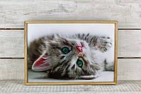 Поднос на подушке Серый кот