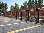Заборы кованые Запорожье, фото 2