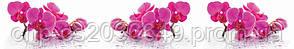 Стеклянный фартук для кухни - скинали Орхидеи Цветы