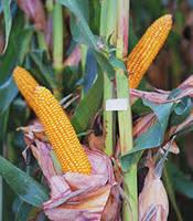 Текни  ФАО 220, год урожая 2014