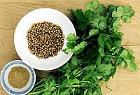Кинза (кориандр)  (семена)