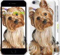 """Чехол на iPhone 6s Йоркширский терьер с хвостиком """"930c-90"""""""