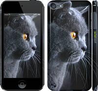 """Чехол на iPod Touch 5 Красивый кот """"3038c-35"""""""