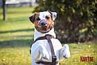Намордник KARELINE из натуральной кожи для малых пород собак размер  L, фото 7