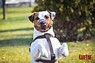 Намордник KARELINE из натуральной кожи для малых пород собак размер XL, фото 6
