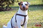 Намордник KARELINE из натуральной кожи для малых пород собак размер XL, фото 7