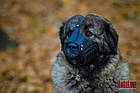 Намордник KARELINE з натуральної шкіри для мастино, кавказької вівчарки розмір L, фото 5
