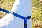 Шлея KARELINE з нейлону зі світловідбивною ниткою і пластиковою пряжкою 20 мм, А-400-560 мм, В-440-620 мм, фото 7