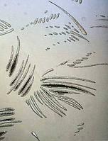 Скло візерункове Шале безбарвне з прирізкою в розмір