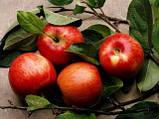 Ароматизатор Яблуко, фото 2