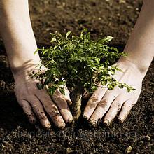 Семена, органическое земледелие, сад и огород, природное земледелие