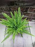 Горшечное растение Папоротник(нефролепис), фото 2