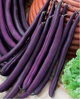 Семена Фасоль спаржевая Фиолетовый полюс стручок  26 см.