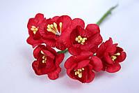 Крокус весенний 72 шт/уп. оптом диаметр 2,5 см, красного цвета