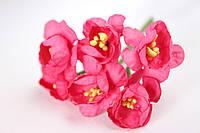 Крокус весенний 72 шт/уп. оптом диаметр 2,5 см, ярко-розового цвета