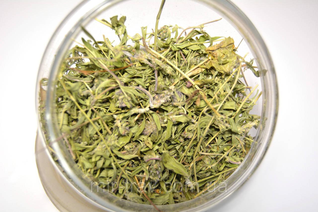 Чабрец обыкновенный трава (тимьян ползучий)