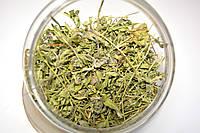 Чабрец обыкновенный трава (тимьян ползучий), фото 1