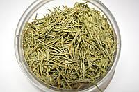 Хвощ полевой трава, фото 1