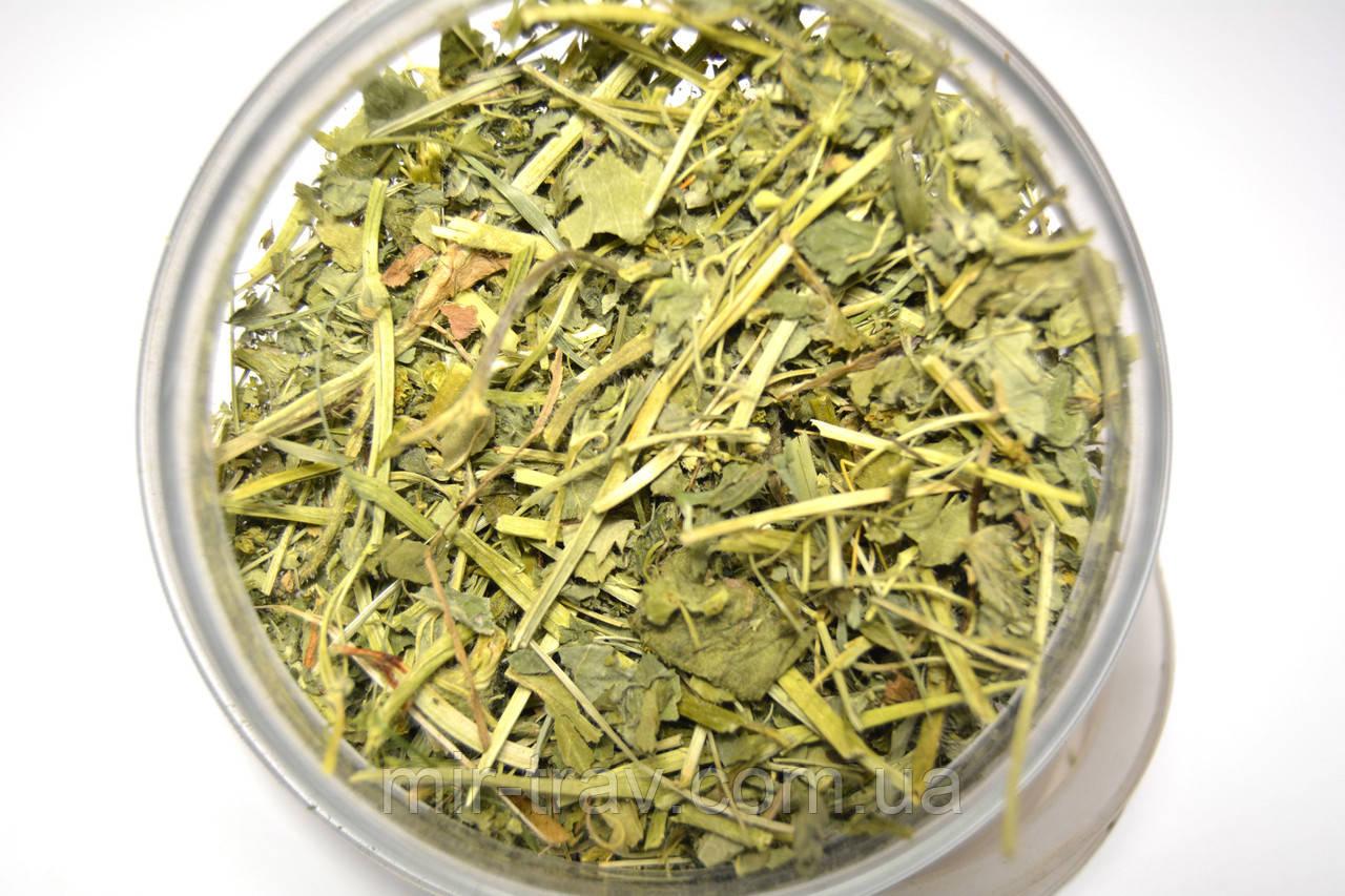 Манжетка обыкновенная трава (манжетка желто-зелная)
