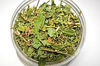 Горец почечуйный трава, фото 1