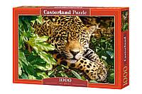 "Пазлы Castorland ""Леопард"" - 1000 элементов."