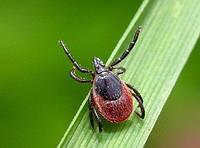 Натуральные масла в борьбе с насекомыми