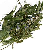 Галега лекарственная трава (козлятник) 500 г