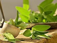 Фітотерапія: трав'яні чаї, фітосиропи
