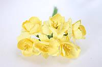 Крокус весенний 6 шт/уп. оптом диаметр 2,5 см, желтого цвета