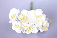 Крокус весенний 6 шт/уп. оптом диаметр 2,5 см, белого  цвета
