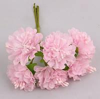 Цветы астры 72 шт. диаметр 3-3.5 см диаметр, розового цвета оптом
