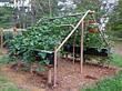 Сетка ОГУРЕЧНАЯ пластиковая на метраж 1,7 м ширина, фото 2