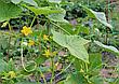 Сетка для огурцов и цветов пластиковая на метраж 1,8 м ширина, фото 3