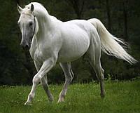 """Картина на стекле """"White horse"""""""