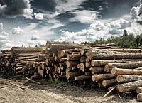 Лес кругляк, купить Киев