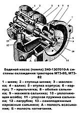 Насос водяной (помпа) МТЗ-80, Д-240 КапРемонт, фото 3