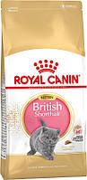 Для кошенят британської кішки Royal Canin Kitten British Shorthair, 10 кг, роял канін