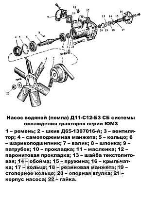 Насос водяной (помпа) ЮМЗ, Д-65, НОВАЯ, фото 2