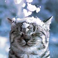 Задержка доставки из-за снегопадов