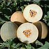 Семена дыни ранней Амалик (Армония) F1, United Genetics (Италия), 1000 семян