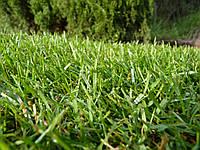 Рулонный газон - теневыносливый