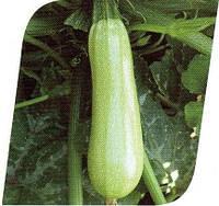 Семена кабачка Амжад F1 1000сем.Семенис.